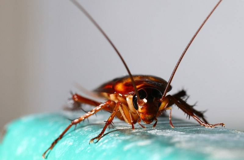 10 самых эффективных народных методов борьбы с тараканами