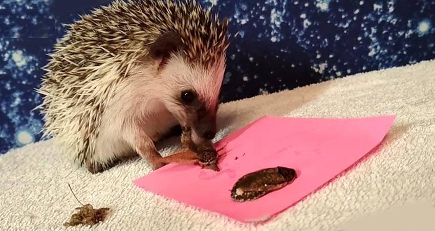 Чем питаются мыши. эффективная приманка