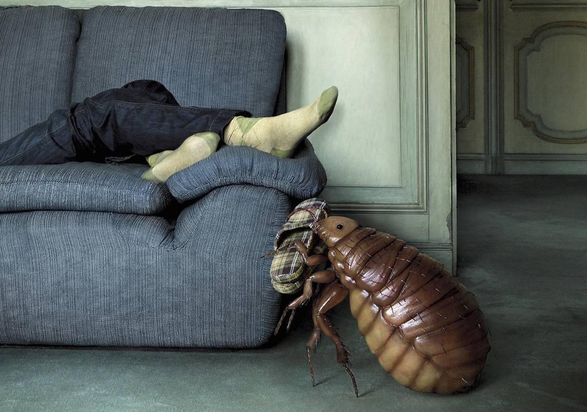 Как вывести клопов из дивана