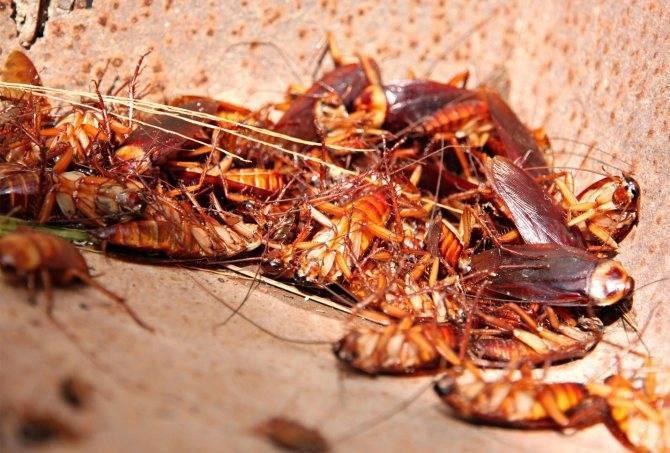 Борьба с тараканами профессиональными инсектицидными средствами
