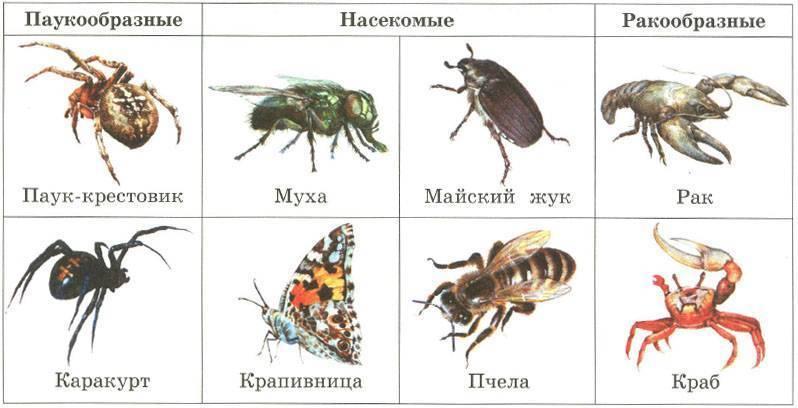 Паук – это насекомое или животное?