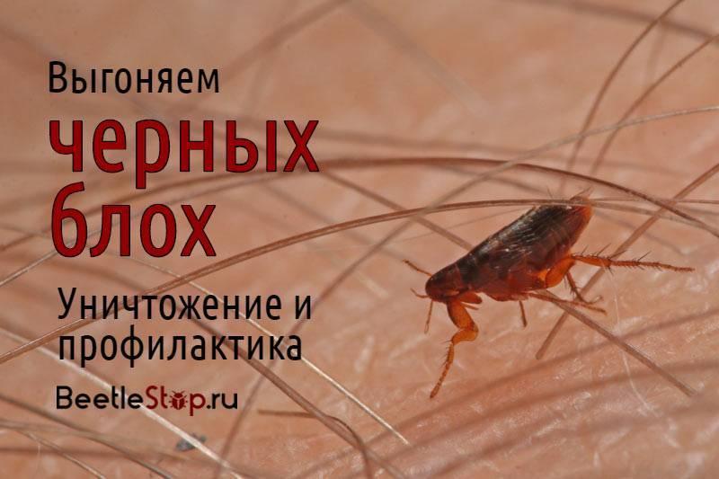 Как избавиться от вшей и блох: паразиты не пройдут!