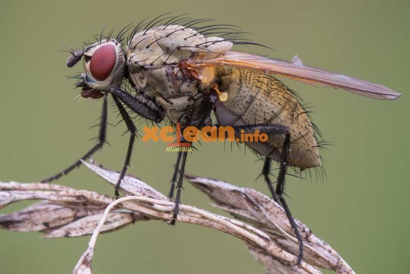Луковая муха: избавляемся от вредителя химическими и народными средствами