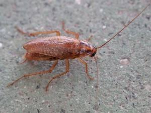 Гель убойная сила от тараканов