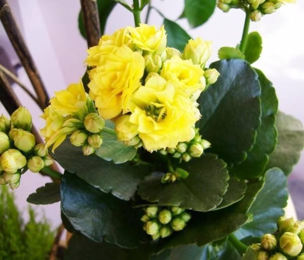 Тля на комнатных растениях: как бороться с ней в домашних условиях?