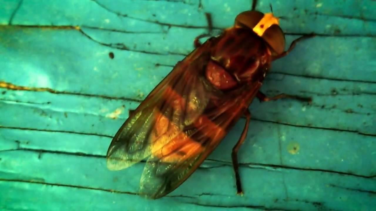 Личинка слепня как один из этапов развития насекомого