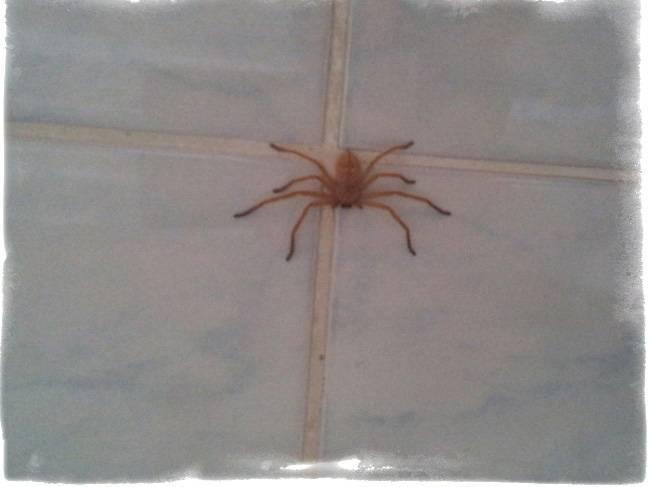 Пауки: приметы и народные поверья о пауках (14 примет)