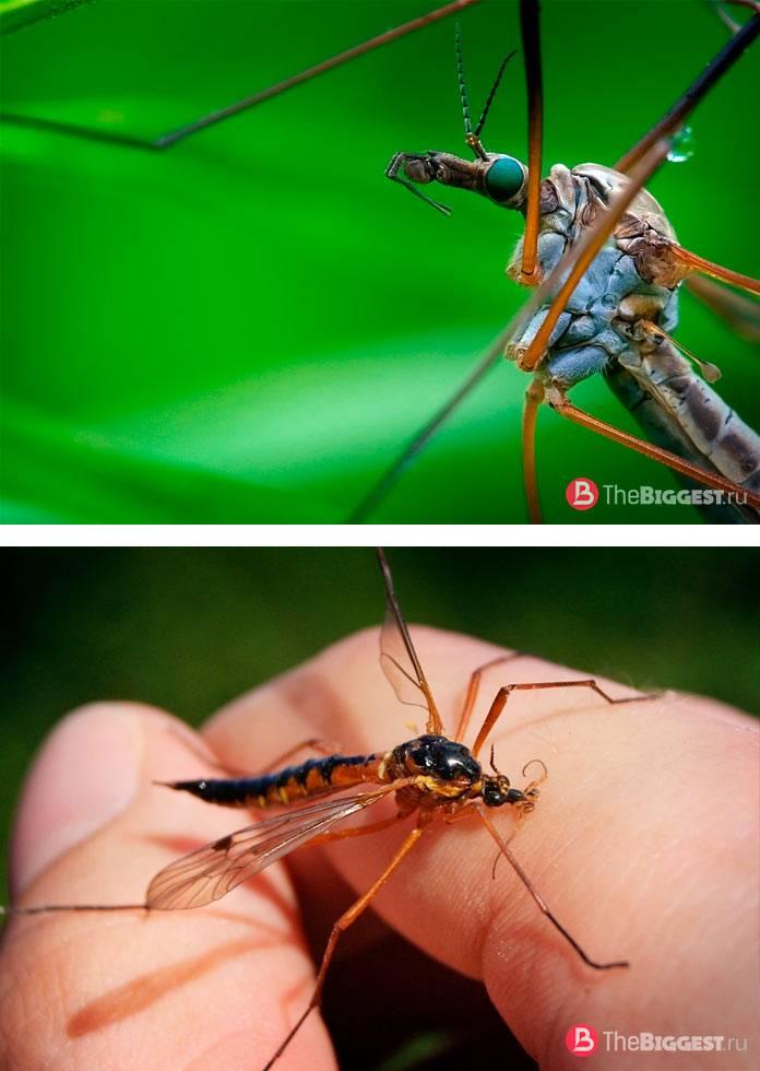 Комары