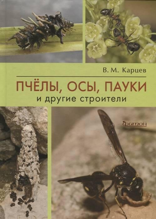 Угроза для деревянных строений — жук — усач: фото, опасность для жилых помещений, методы уничтожения насекомого