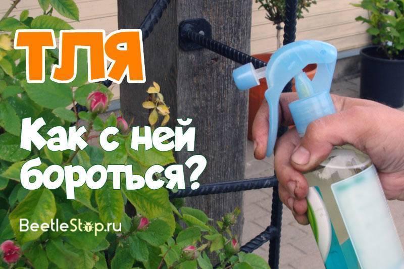 Средства от тли – выбираем эффективный инсектицид