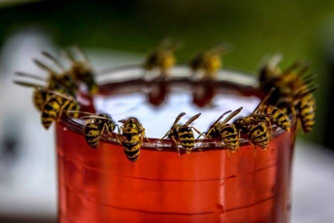 Растения-инсектициды и их использование
