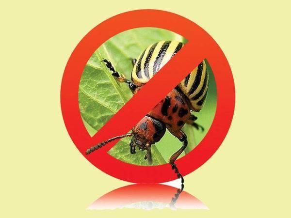 Апачи от колорадского жука: инструкция по применению, отзывы