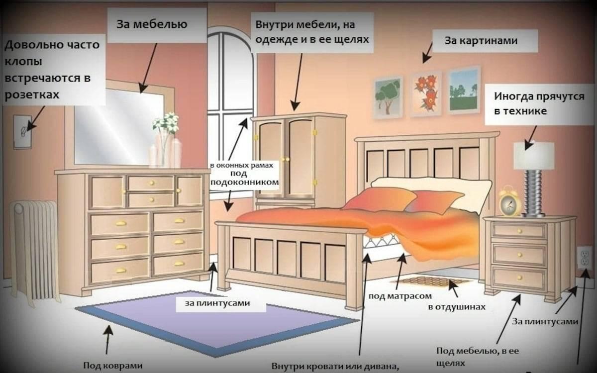 Места обитания где живут клопы в квартире: признаки их наличия, как найти и уничтожить гнезда