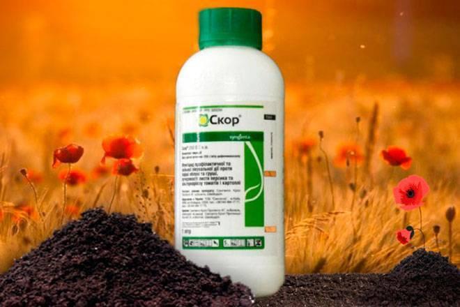Битва за урожай: применяем инсектицид регент от колорадского жука