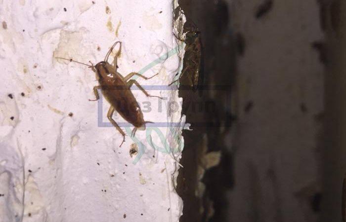 Профилактика появления тараканов