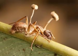 Домашние муравьи откуда берутся в квартире и как избавиться?