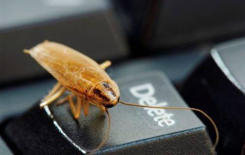 Самые мощные средства от тараканов в квартире