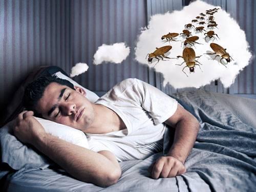Тараканы во сне. толкование по нескольким сонникам