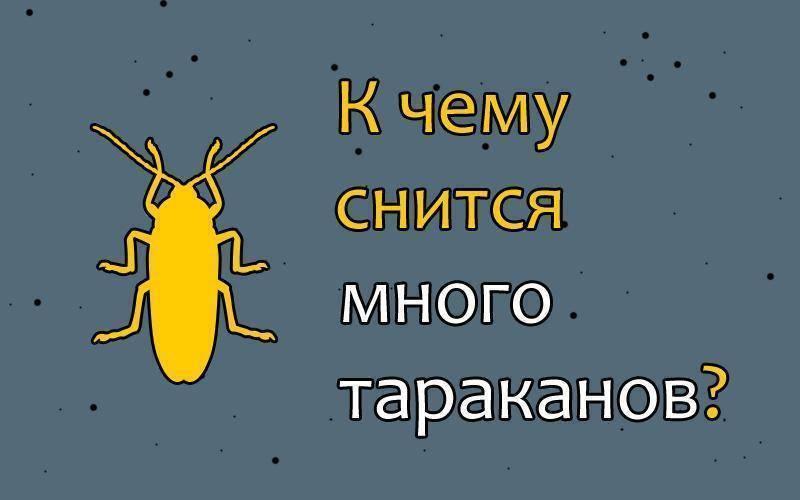 Много тараканов в квартире убивать