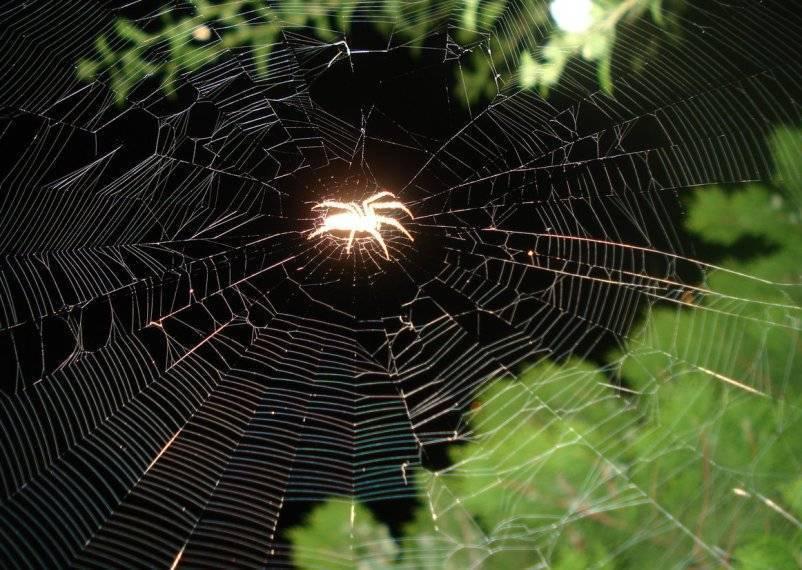 Паук. паутина. народные приметы и суеверия