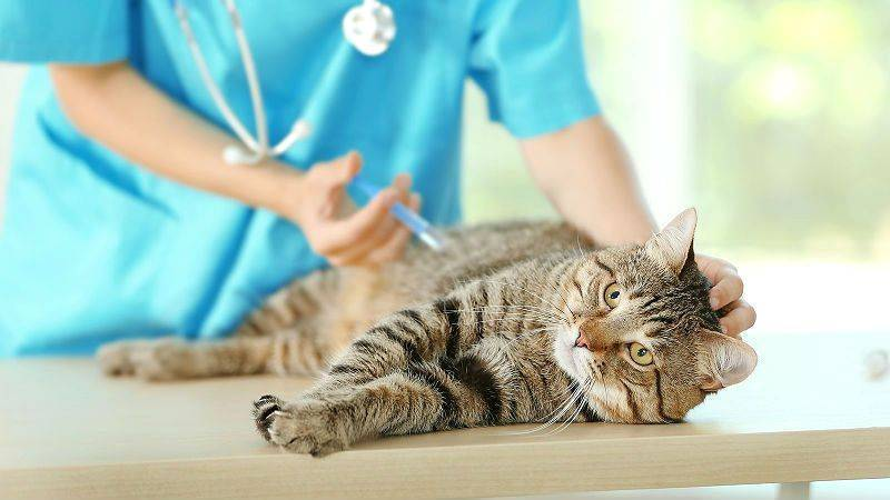 Самое лучшее средство от блох для кошек