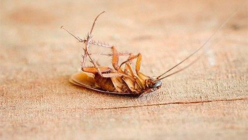 Аквафумигатор от тараканов в квартире или доме