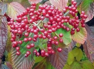 Чем травить гусениц на деревьях и цветах: рейтинг лучших средств