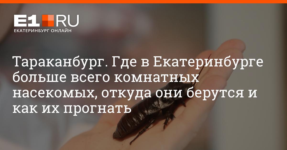 Тараканы могут снова вернутся в московские квартиры