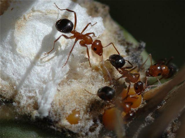 Какая пища привлекательна для муравьев?