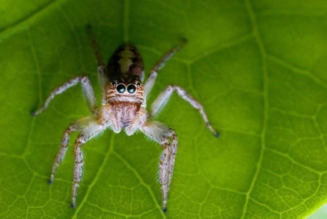 Самые распространённые пауки россии
