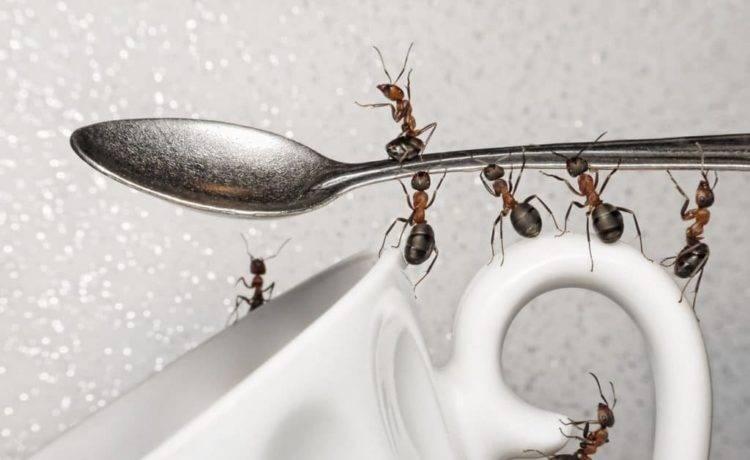 Как избавиться от муравьев в доме: наиболее эффективные способы