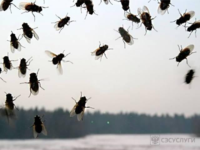 3 эффективных способа избавления от мух в квартире
