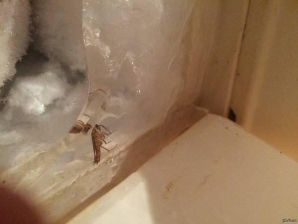 Вредны ли тараканы для человека и стоит ли их бояться?
