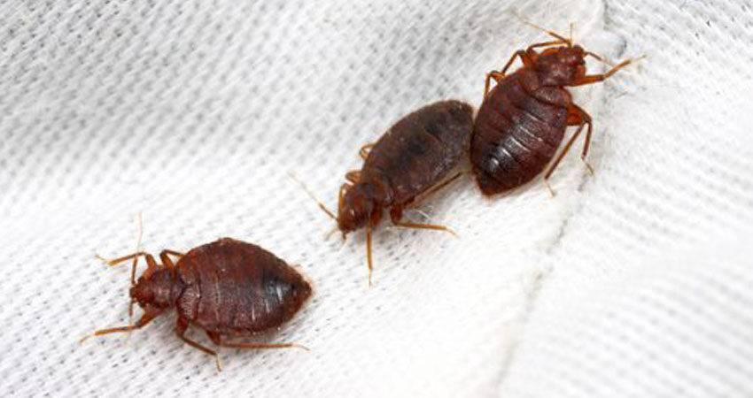 Чем опасны мухи для людей и животных?