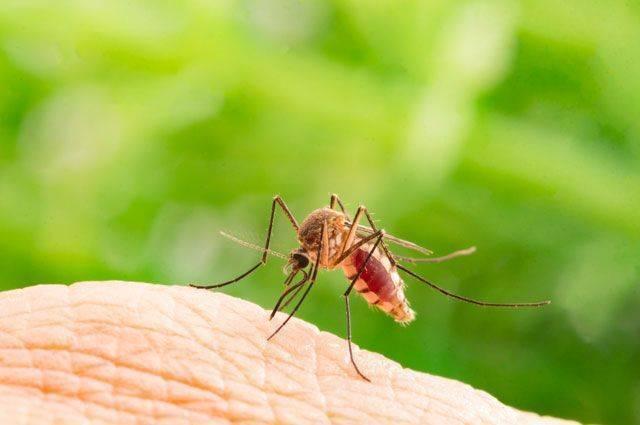 Что делать и чем помочь от укусов комаров?