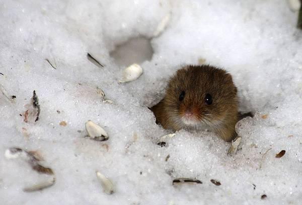 Что делают клещи зимой?