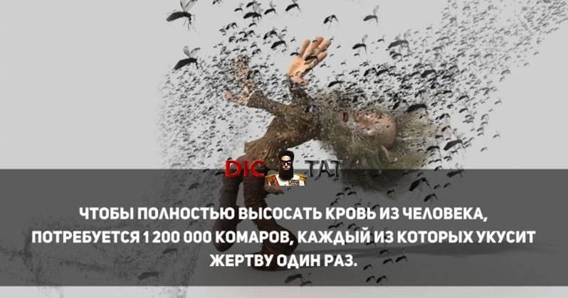 Сколько нужно комаров, чтобы выпить всю кровь у человека