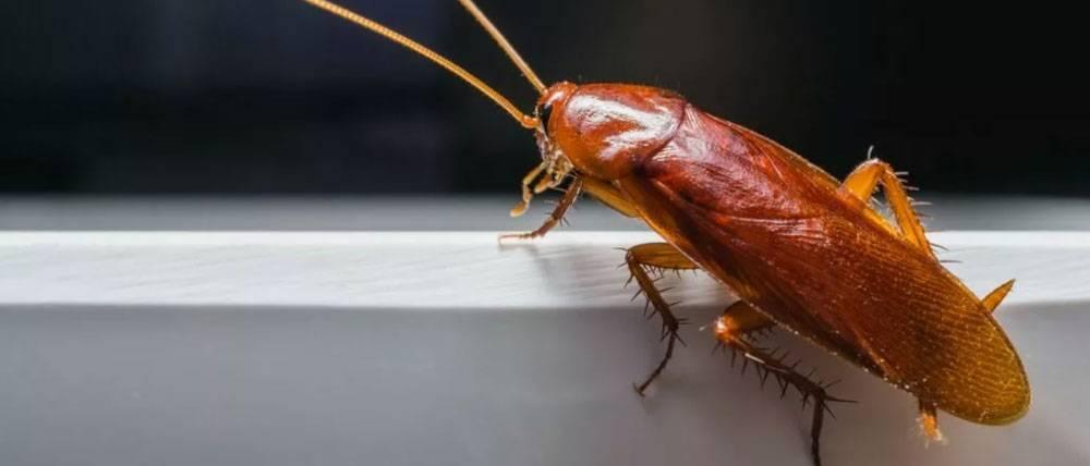 Как избавится от тараканов в квартире с помощью тумана? и можно ли ним уничтожить всех особей?