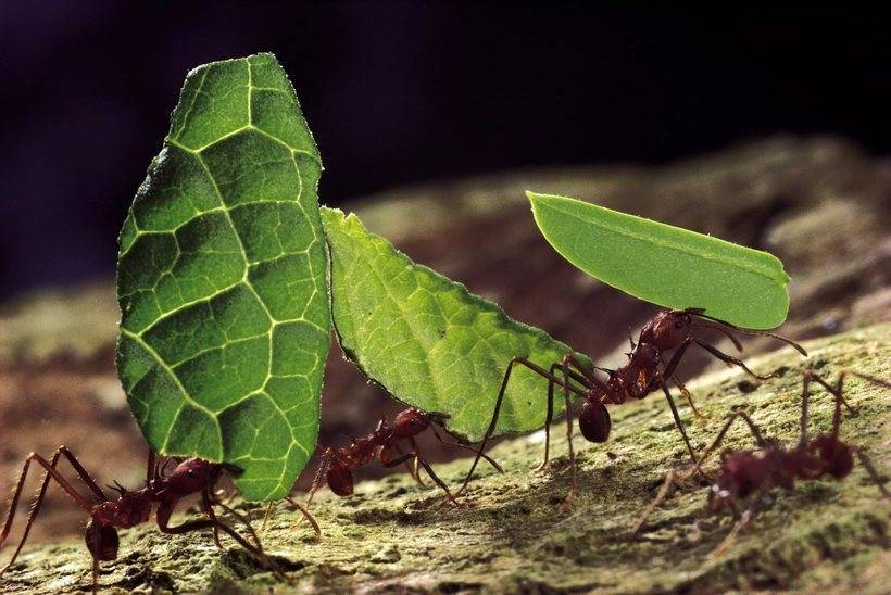 Как зимуют муравьи