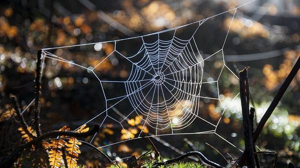 Сонник паутина, к чему снится паутина, во сне паутина