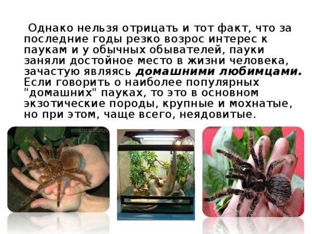 Тарантул строение тела. необыкновенный паук тарантул и многообразие его видов
