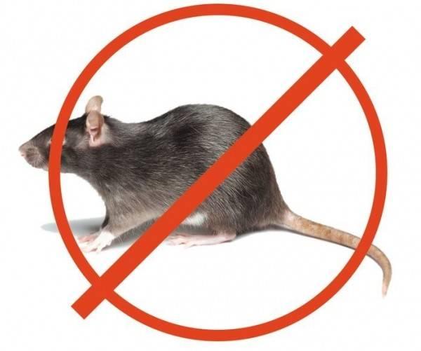 10 идей, как избавиться от мышей в дачном доме (только проверенные средства!)