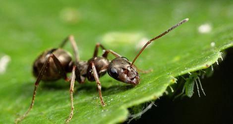 Как избавиться от муравьев на грядке с огурцами, не навредив себе