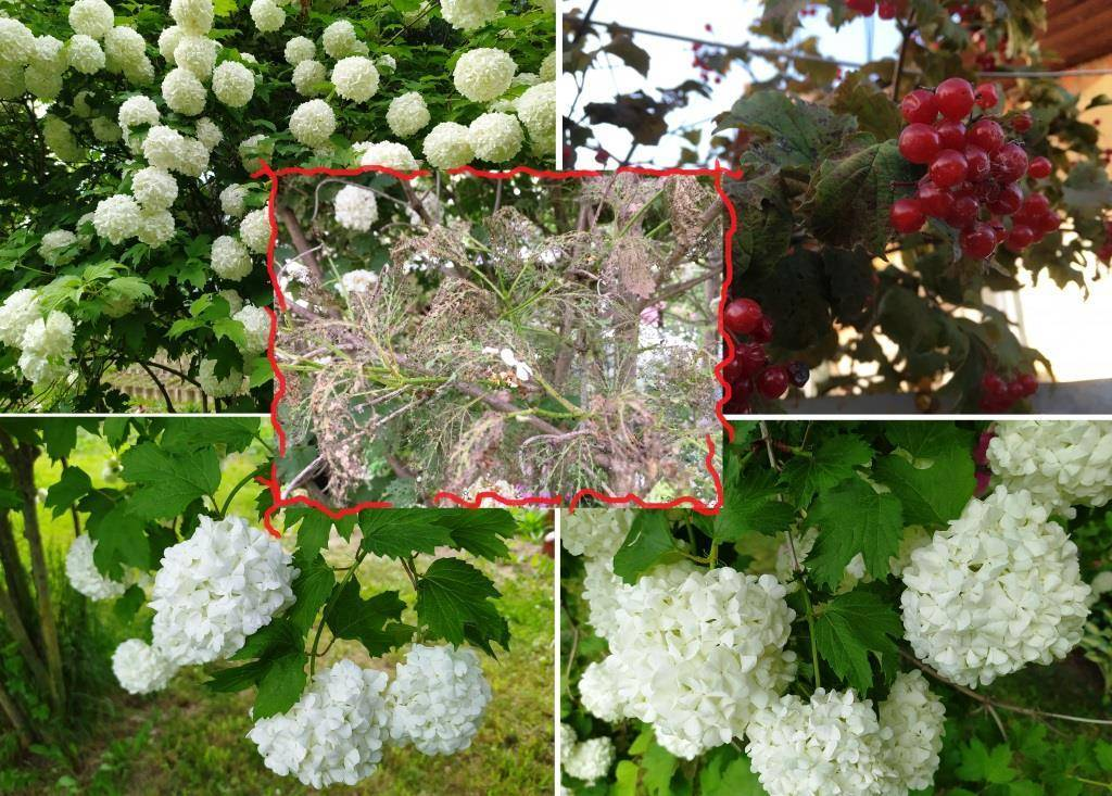 Чем обработать кусты и плодовые деревья от гусениц: эффективные препараты и народные средства