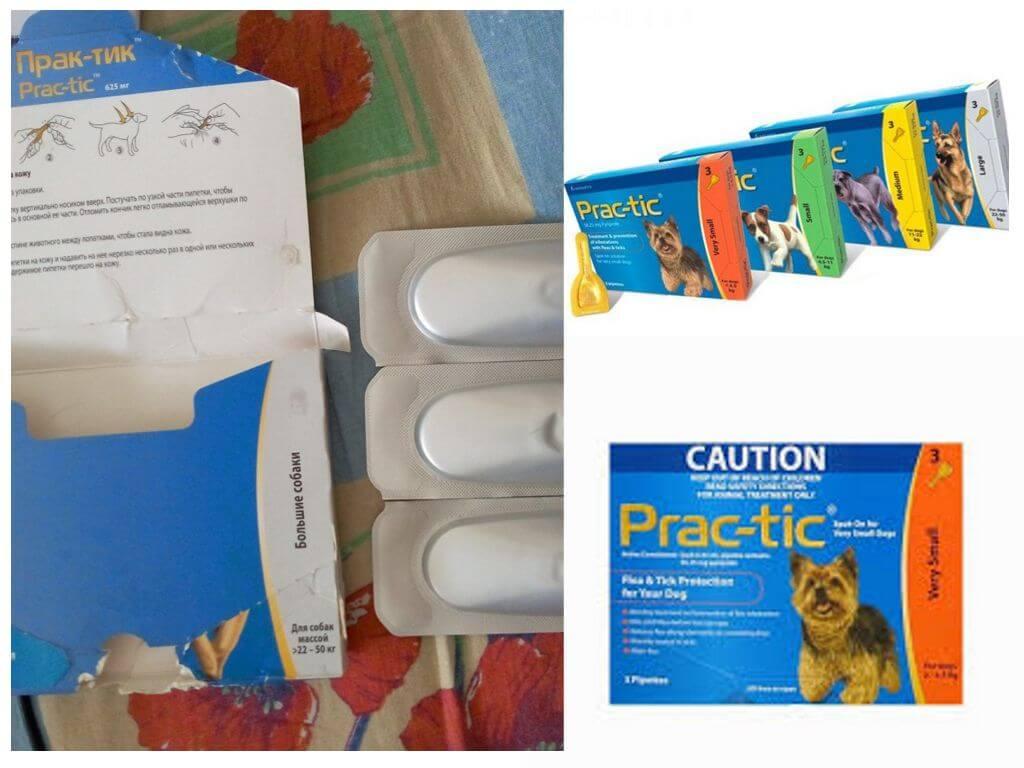 Мультикан 6: инструкция по применению препарата для собак