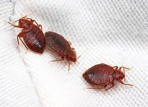 Ультразвук от тараканов: виды и принцип действия отпугивателей, отзывы