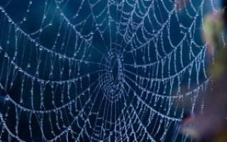 К чему снится паутина?