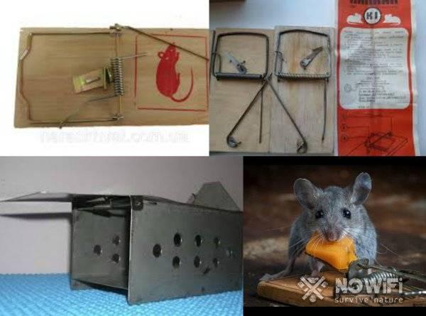 Ловушка для мышей из ведра