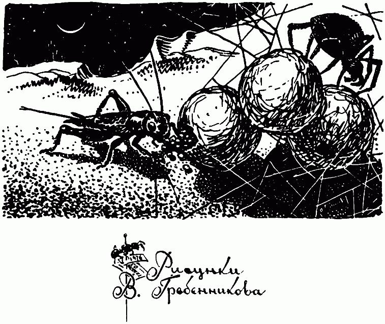 Скорпионница муха насекомое. описание, особенности, образ жизни и среда обитания скорпионницы