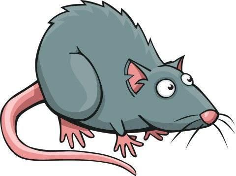 Средства и методы выведения запаха дохлой крысы или мыши